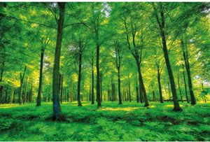 Fototapeten Bäume