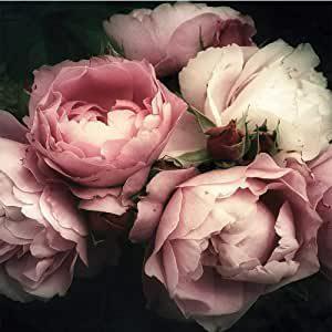 Fototapeten Blumen